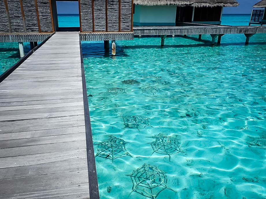 Reefscapers coral frames in the shallow lagoon, Spa area, Landaa Giraavaru