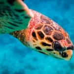 Beth's Marine Biology Blog - Turtle snorkel pic3