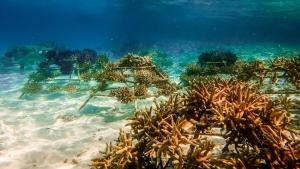 Reefscapers coral frames (Reefscapers Coral Frame Updates)