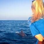 Cetacean spotting - Pilot Whales