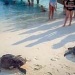 Isabella & Sofia - turtle release