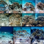 Reefscapers - coral frame 2009-2015