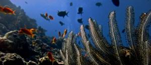 Cath's Marine Savers blog – Feather Star (Meet Cath – our new Marine Biology Intern)