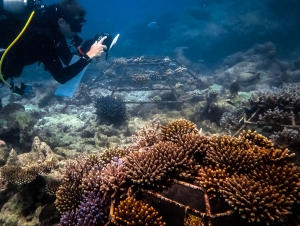 Coral frame photography and monitoring – Reefscapers (Meet Cath – our new Marine Biology Intern)