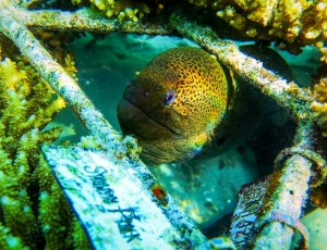 Marine Life – eel with coral frame (A Record Month for our Reefscapers Coral Frames!)