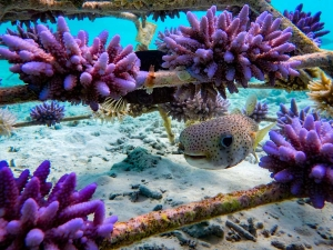 Reefscapers coral frames – seagrass experiment (Reefscapers – Coral Propagation Experiments)