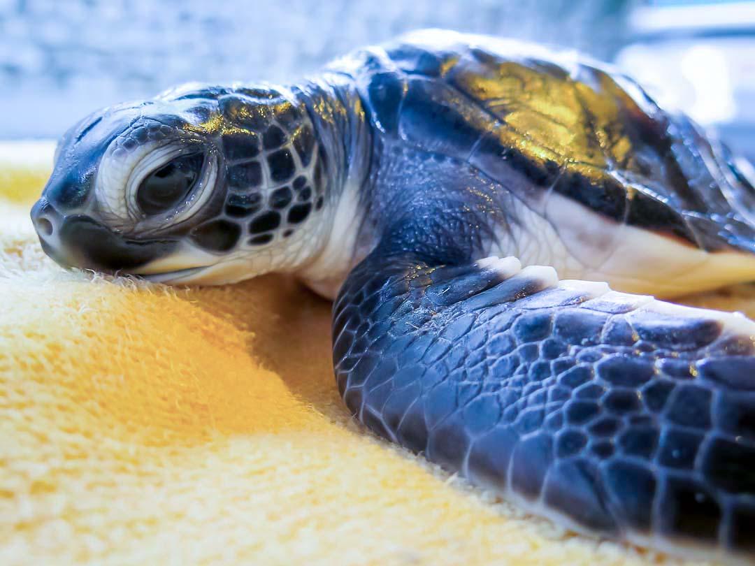 head-start-turtle-flora-cm-n024-106