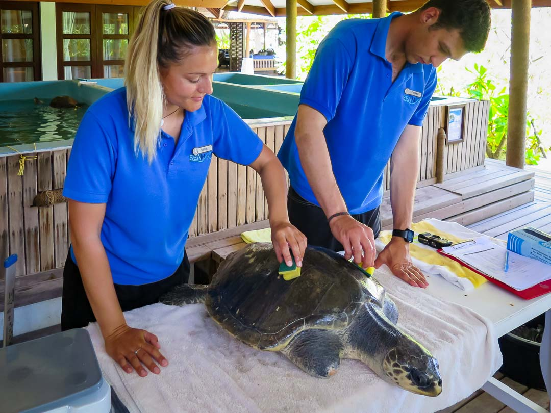 Rescue turtle Greg Turtie RB.LO.084 Marine Savers Maldives