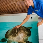Turtle rehabilitation pools - Winy [Seamarc Maldives Volunteers]