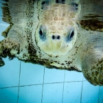 Kerry - rescue turtle, recovery pool