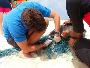 Luo Ma – sandbank rescue (Sea Turtle Updates, Landaa Giraavaru)