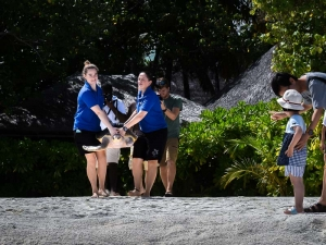 Peggy flying turtle release Marine Savers Maldives (Peggy)