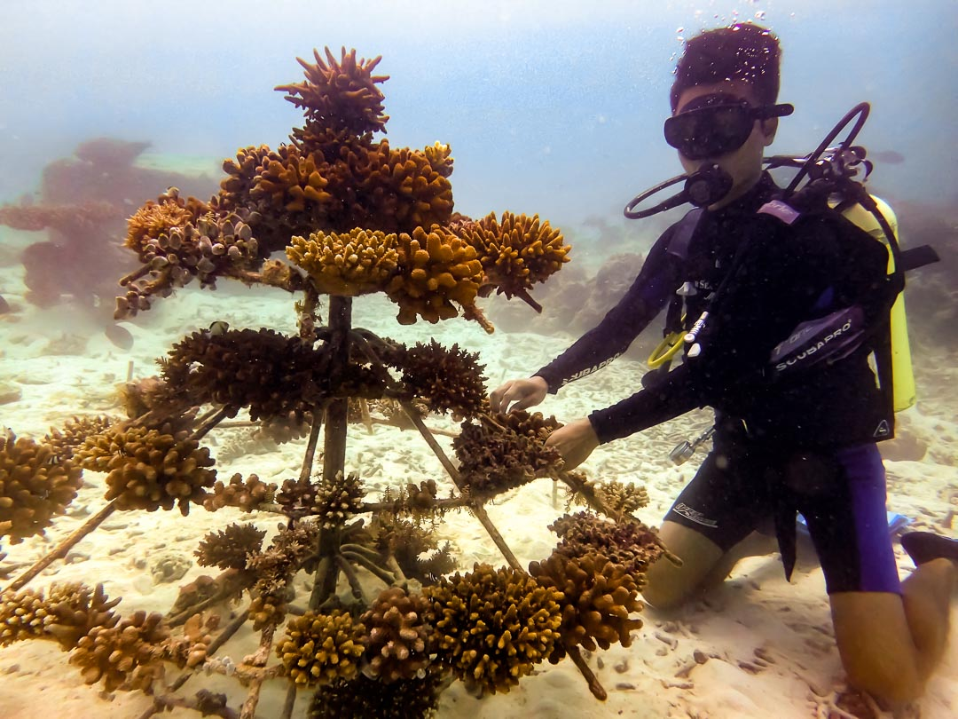 Seamarc Maldives - marine biology volunteers - diving Reefscapers coral frames