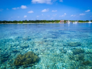 Lauren's blog – marine biology volunteer with Seamarc Maldives – Landaa Giraavaru (Lauren's Marine Biology Blog)