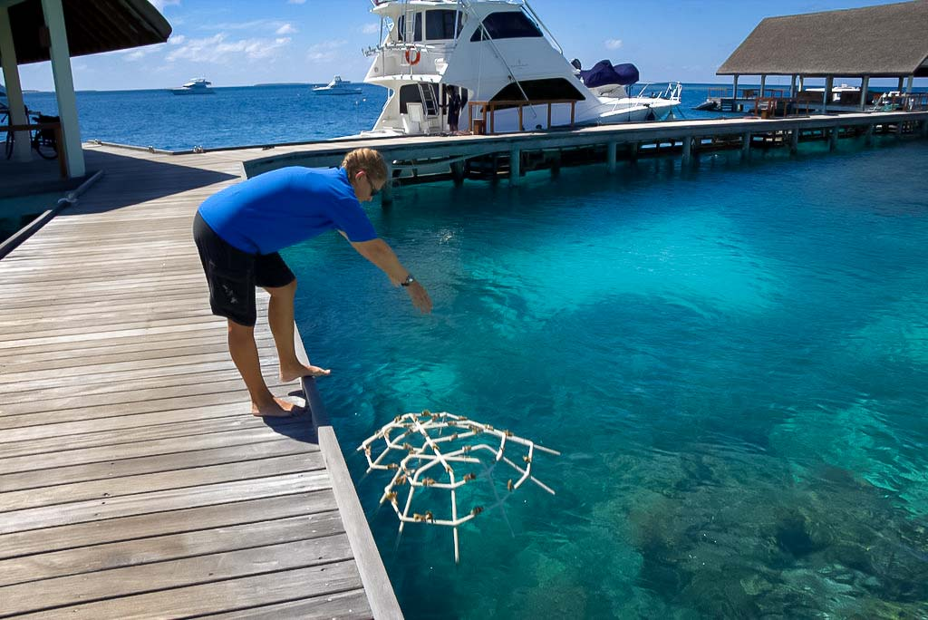 Lauren's blog - marine biology volunteer with Seamarc Maldives - Reefscapers coral frame into lagoon
