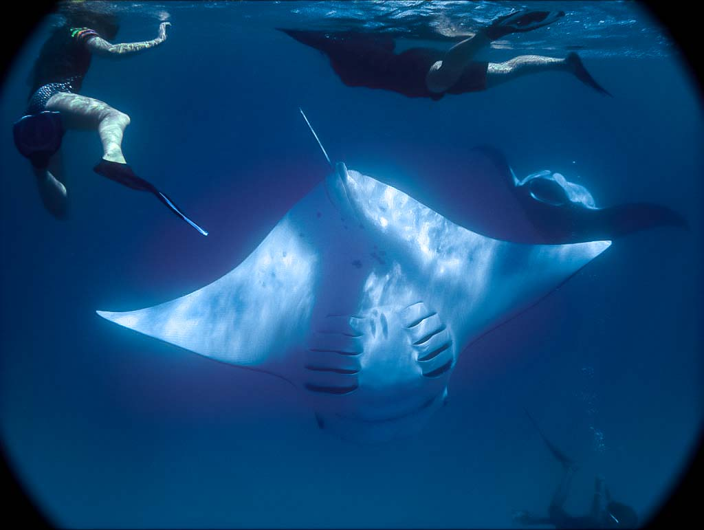 Lauren's blog - marine biology volunteer with Seamarc Maldives - mantas