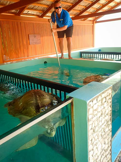 Lauren's blog - marine biology volunteer with Seamarc Maldives - turtle pool cleaning 2