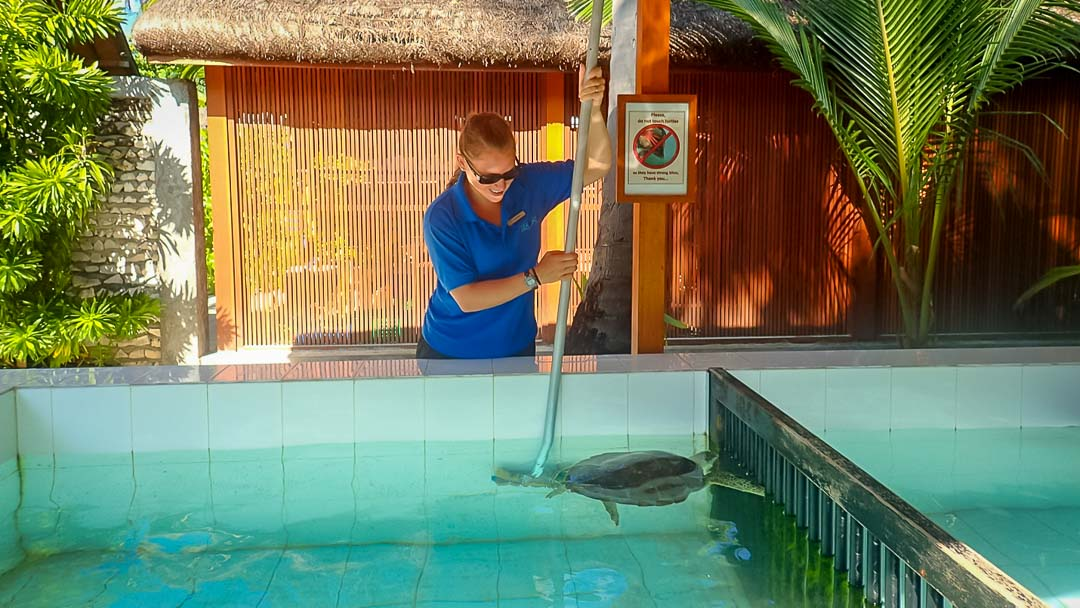 Lauren's blog - marine biology volunteer with Seamarc Maldives - turtle pool cleaning