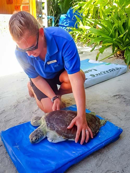 Lauren's blog - marine biology volunteer with Seamarc Maldives - turtle rehabilitation