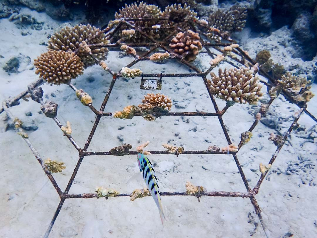 Reefscapers coral frame LG1260 (Nov 2015) recovered