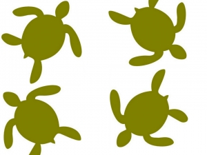 turtle only collage x4 hatchlings (N008 KH)
