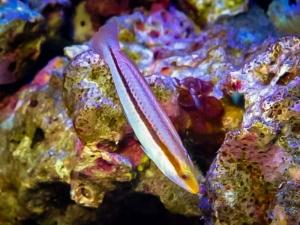 (Marine Life – Aquarium and Ocean)
