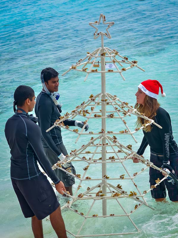 Reefscapers Xmas Tree Frame into the lagoon