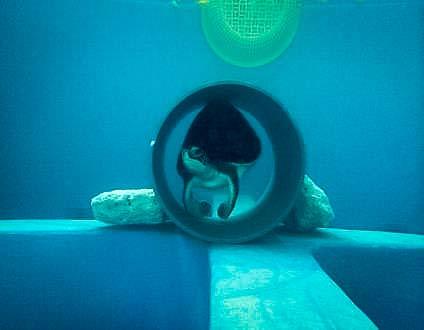Sea Turtle rehabilitation - enrichment