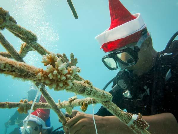 Emily – marine biology intern, Seamarc Maldives (7)