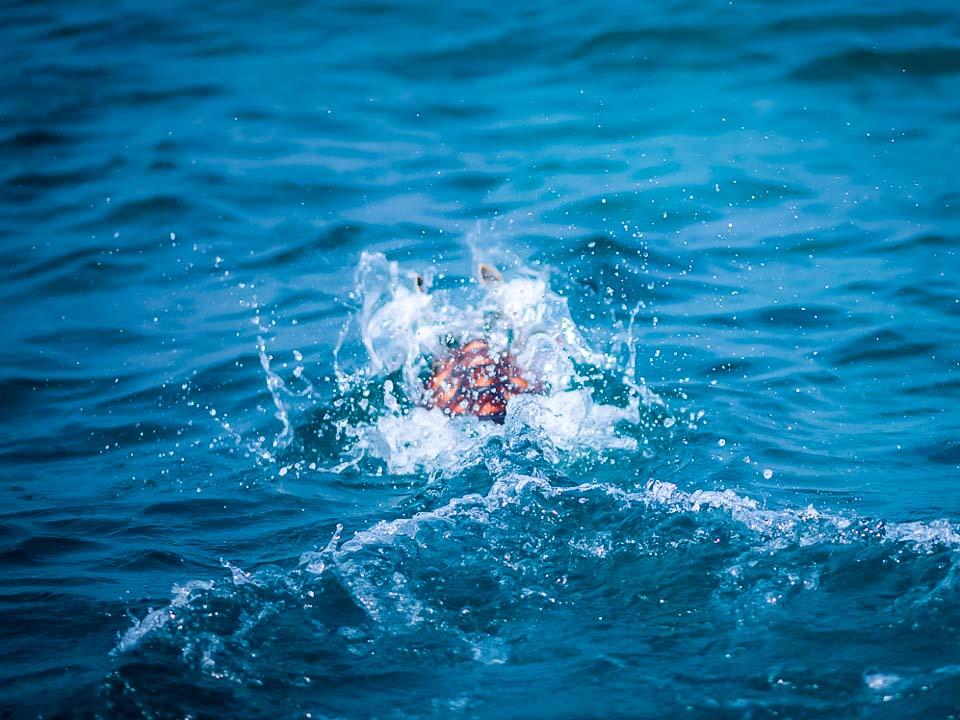 Head Start Green turtles - Petunia in the sea