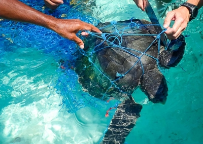 Rescue of Sawan - juvenile Olive Ridley turtle