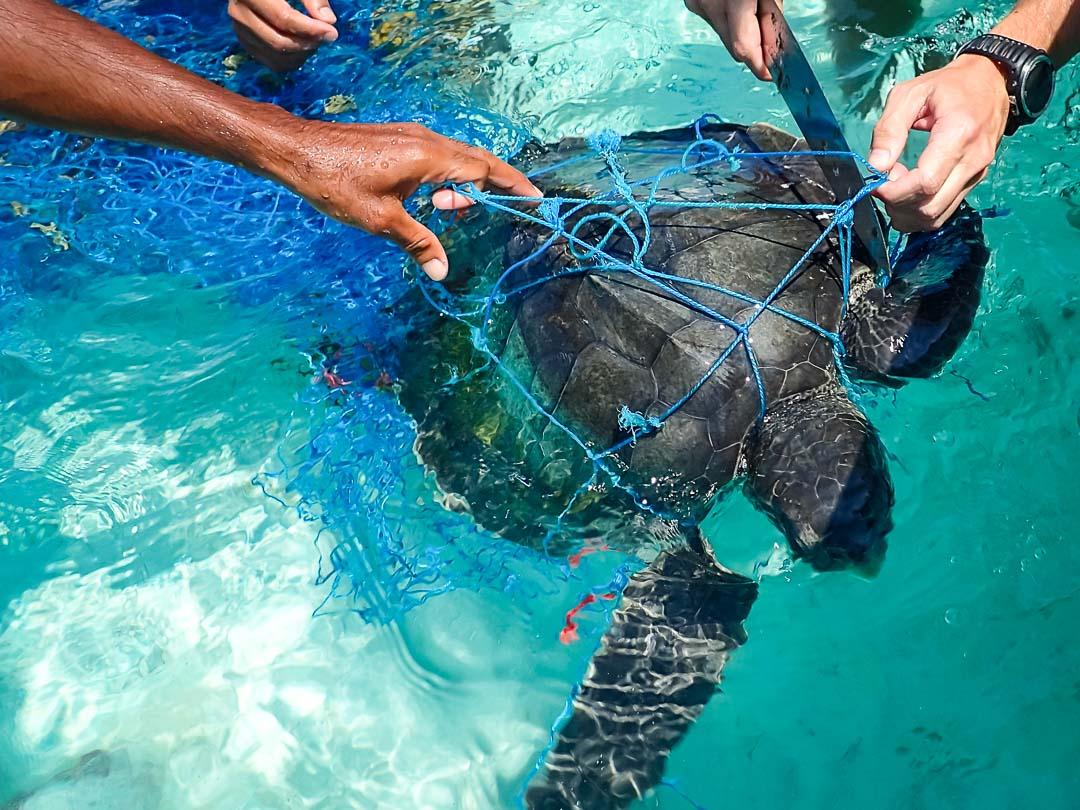 Head Start Green turtles - Petunia on boat
