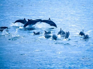 Roz – marine biology intern, Seamarc Maldives (5) (Roz's Marine Biology Diary)