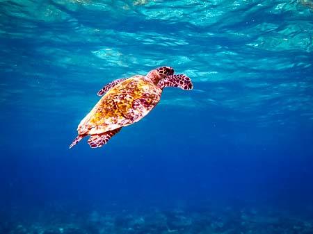 Roz – marine biology intern, Seamarc Maldives (6)
