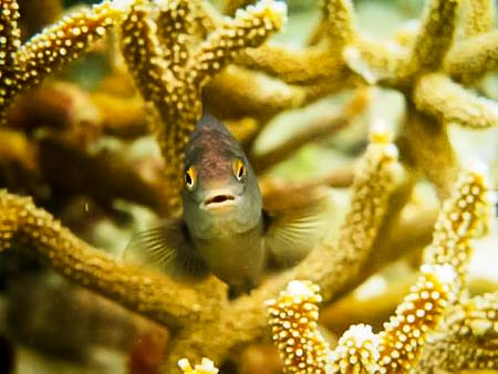 Roz – marine biology intern, Seamarc Maldives (9)