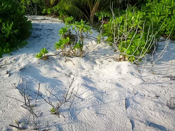 Turtle nest on beach