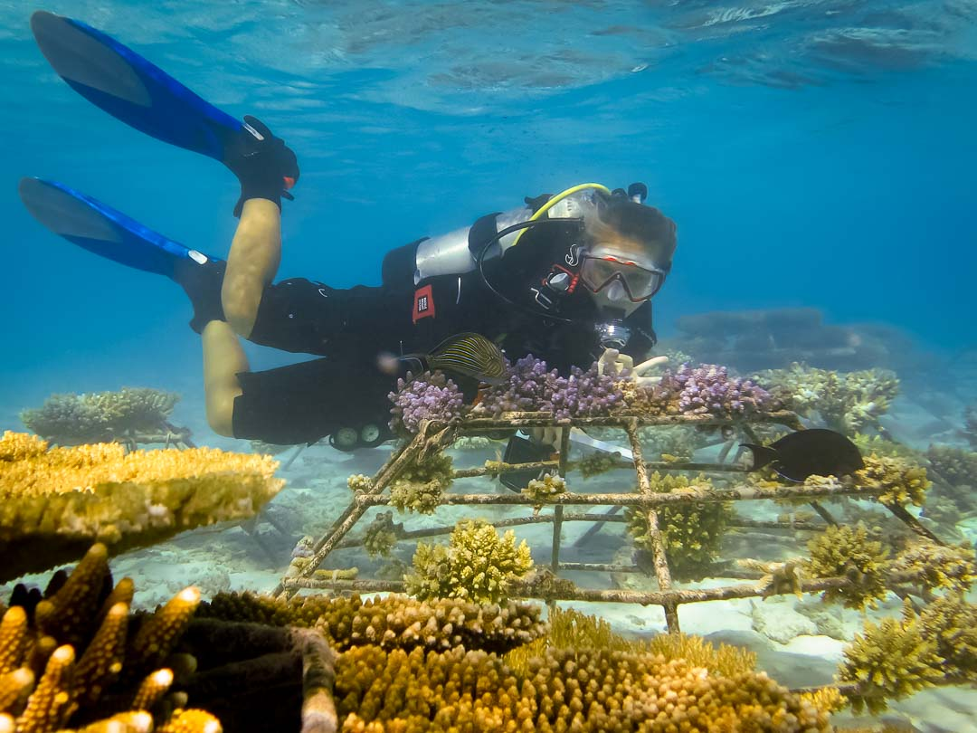 Emily's internship Marine Savers Maldives (0281) coral frame maintenance