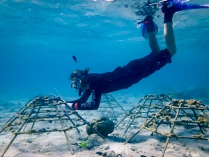 Emily's internship Marine Savers Maldives (9122) coral frames (Emily's Adventures – Chapter 3)