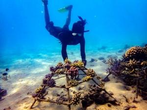 Dhiya's blog – Marine biology internship Maldives (Dhiya's Creatures of Landaa)