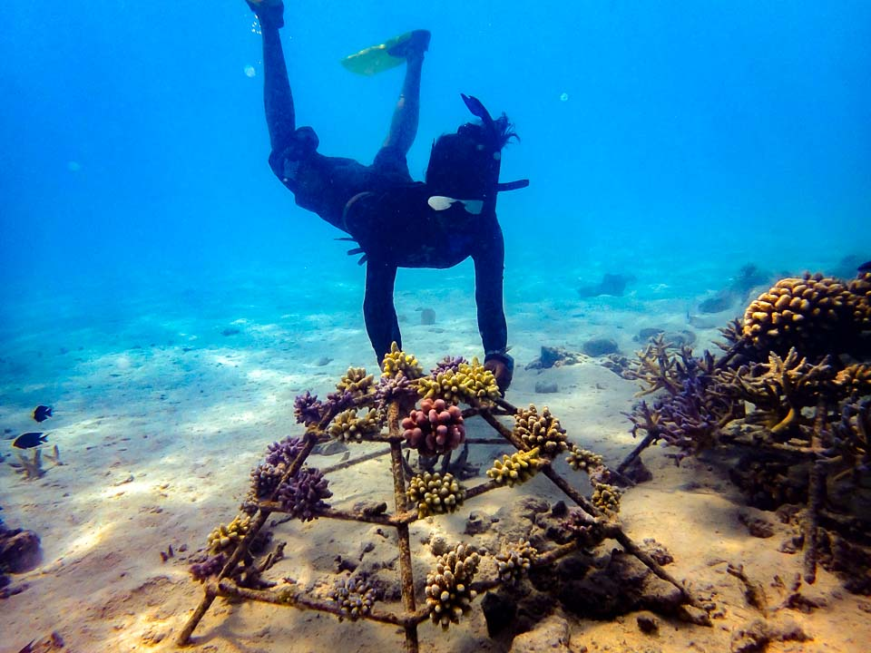 Dhiya's blog - Marine biology internship Maldives