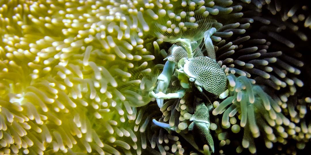 Emily's blog - Marine biology internship Maldives