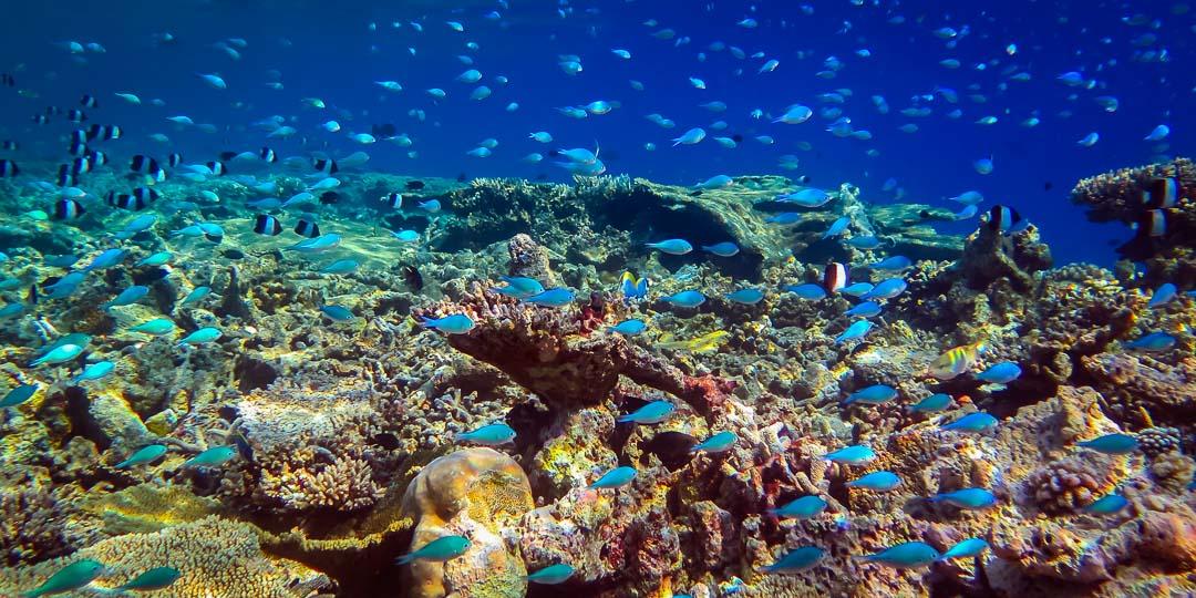 Excursions - beautiful corals and marine life (Marine Savers Maldives)
