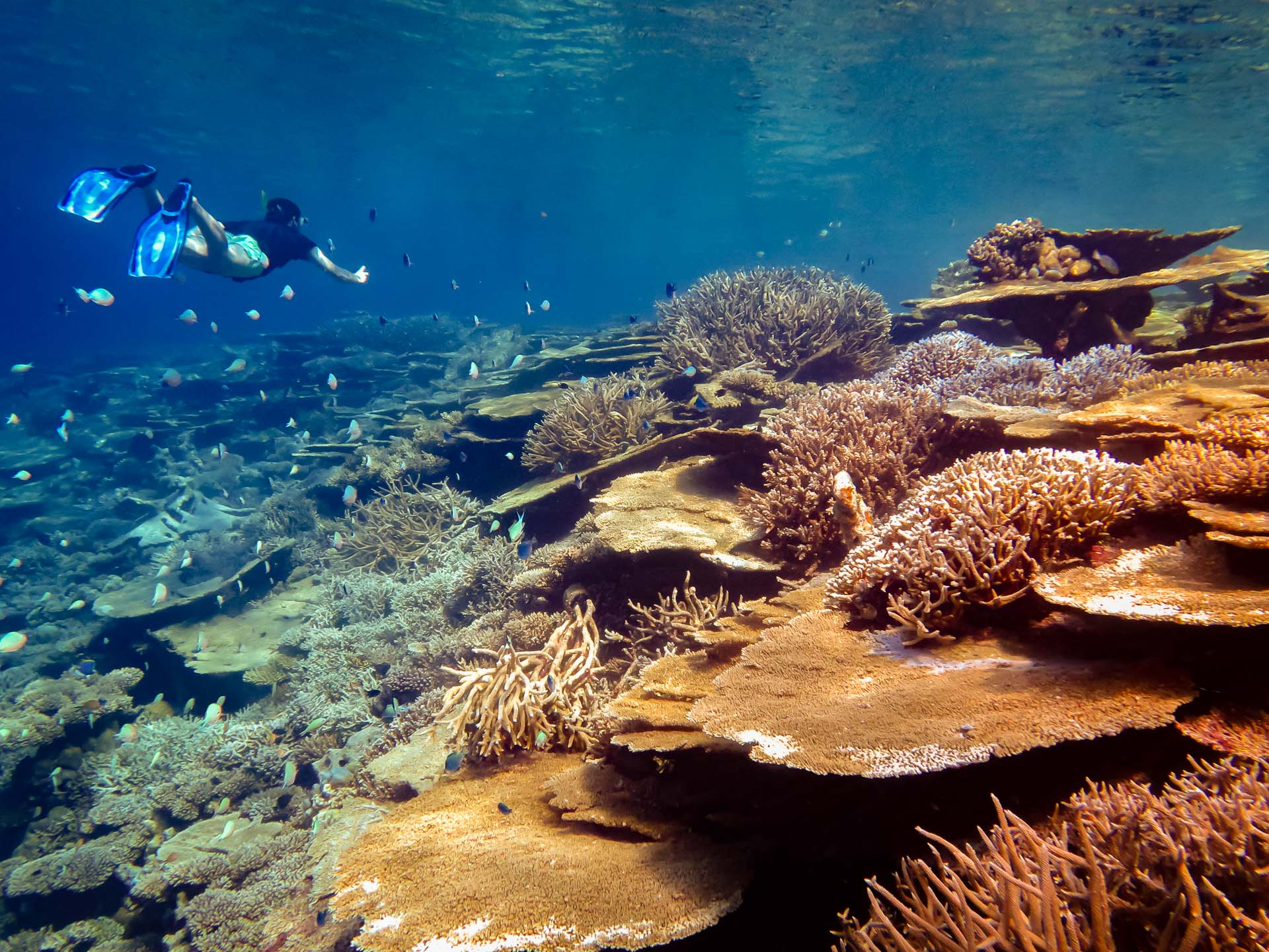 Excursions - beautiful corals and marine life (Marine Savers Maldives)