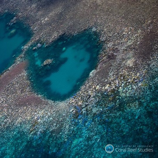Great Barrier Reef – 93pc bleach