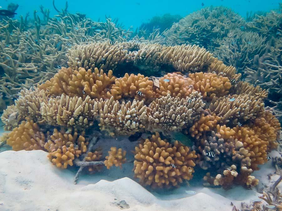 Coral frame KH0413 (28-Feb-16)