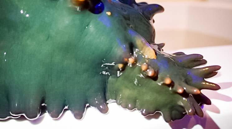 Stichopus chloronotus - asexual division (Marine Savers Maldives)