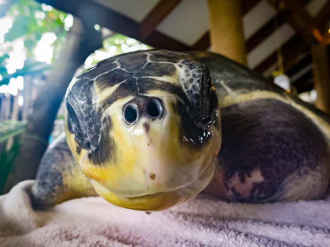 Greg - smiling - sea turtle conservation Maldives Marine Savers