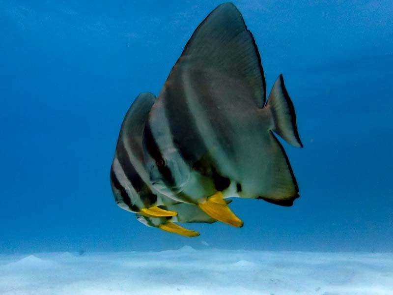 Emily's Blog - Marine Savers internship Seamarc Maldives