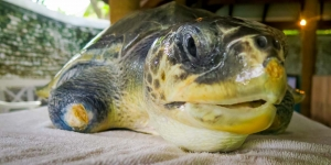 Greg – Marine Savers volunteers Maldives rescue turtles (Adam's Turtle Tales)
