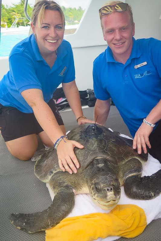Nash release - Marine Savers volunteers Maldives turtles